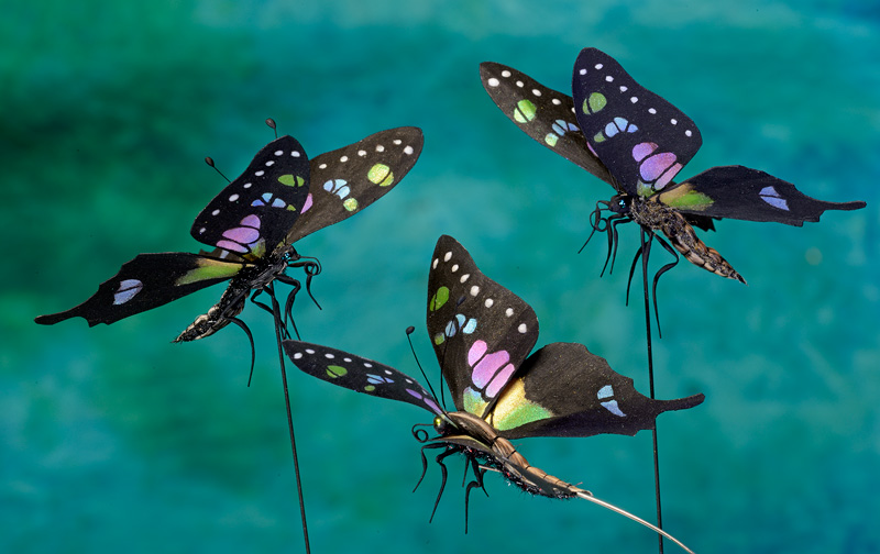 Rainbow colored butterflies