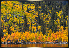 Sierra fall foliage Septmber 2011
