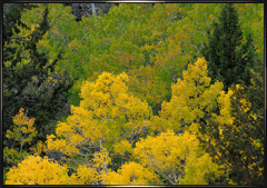 Sierra fall foliage photography September 22 & 23 2010
