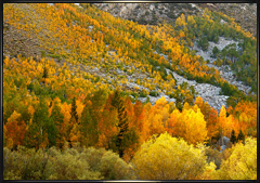 Sierra Fall Foliage