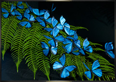 Blue butterfly replicas