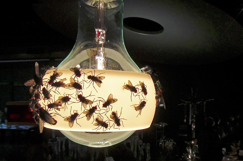 House of Flies light fixture