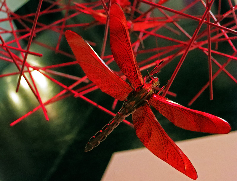 Graham Owen red dragonfly replica art