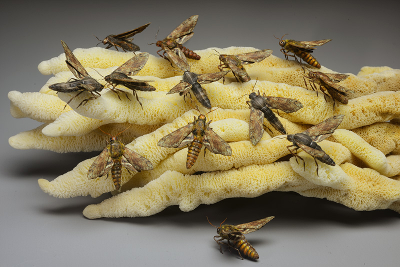 realistic moths