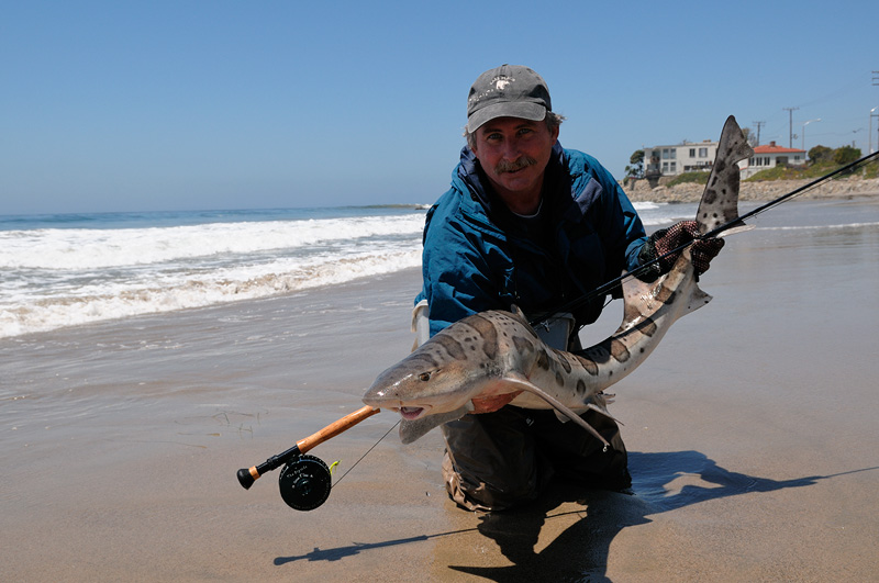 Fly fishing for leopard sharks on the beach in malibu for Shark rigs for surf fishing