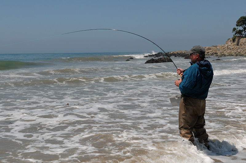 fly fishing for leopard sharks on the beach in malibu