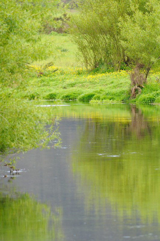 Spring foliage reflected upon a New Zealand spring creek trout stream