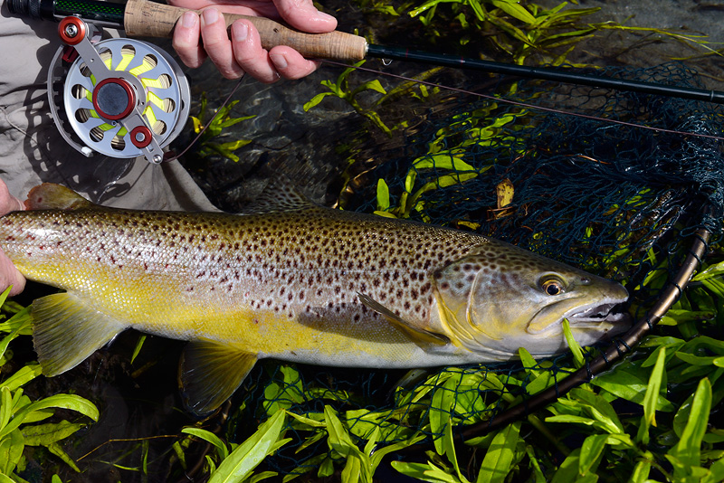 Ari Hart Trilogy fly reel in action