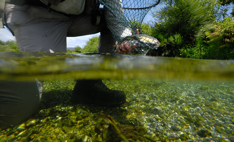 Over under water fly fishing photo of a nice brown trout