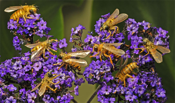 Swarm of fake realistic bees on purple flowers