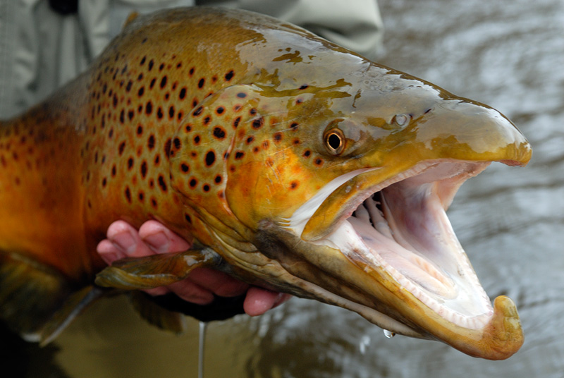 2007 Fall Fly Fishing Trip Photography
