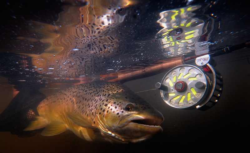 Ari Hart Trilogy fly reel, Carlin bamboo fly rod, and a beautiful brown trout