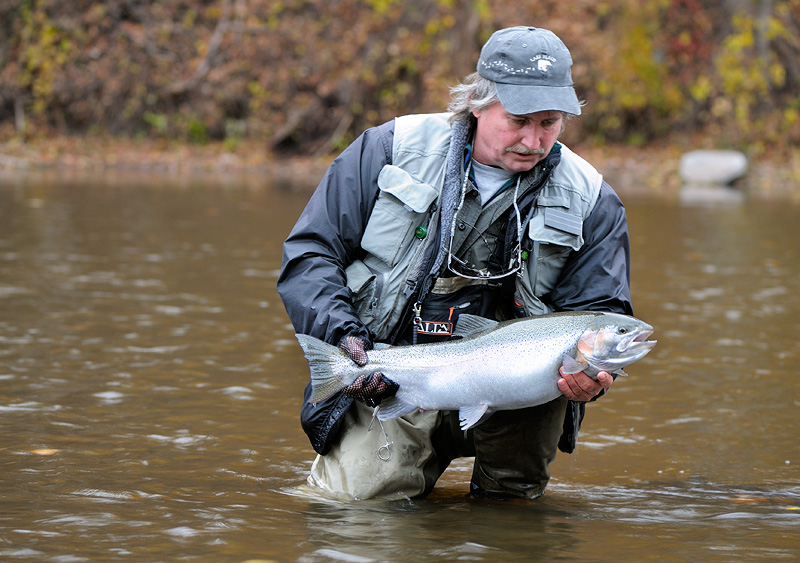 Chrome steelhead trout