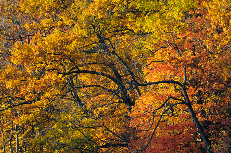 New York fall foliage colors