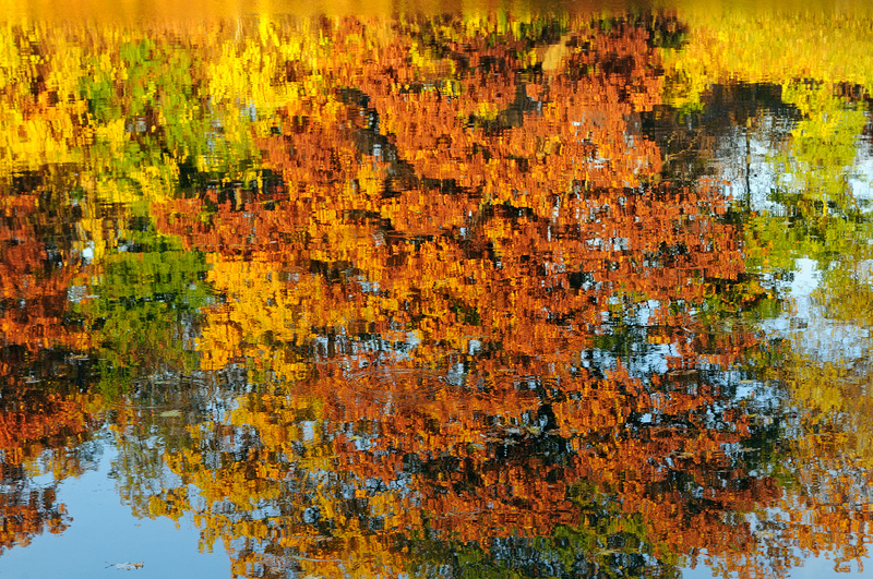 East coast fall foliage maple tree reflection upon water