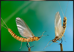 Image result for fly tying