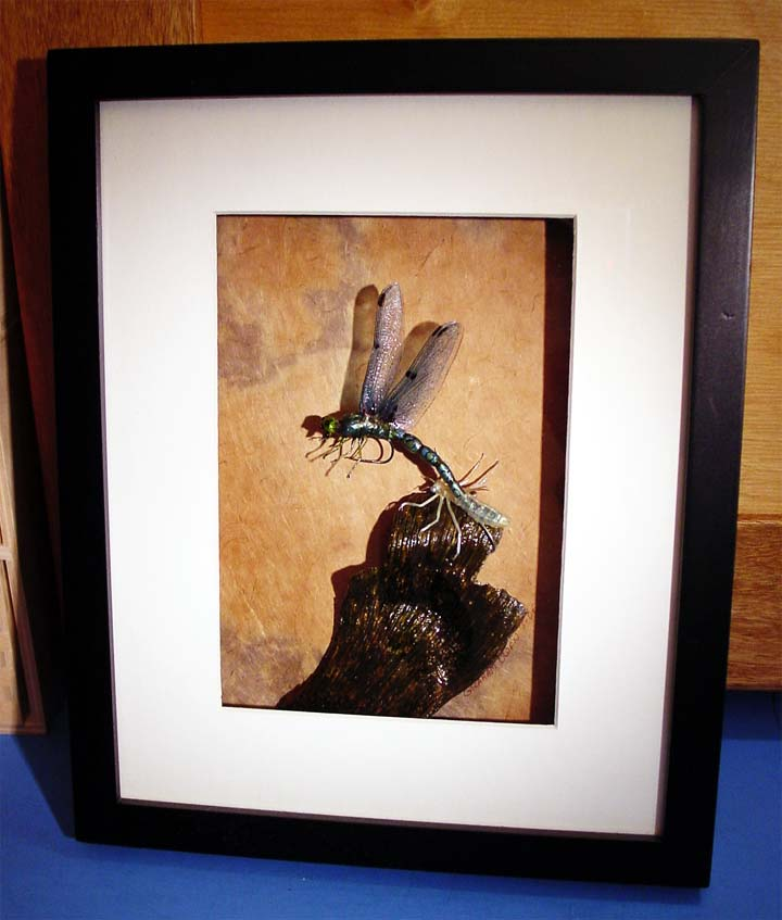 another picture of a realistic artistic emerging dragonfly