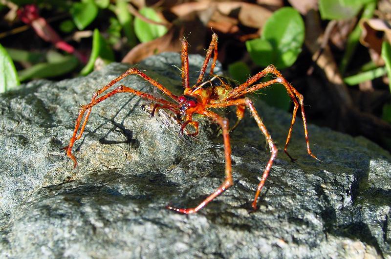Araignée, Graham Owen