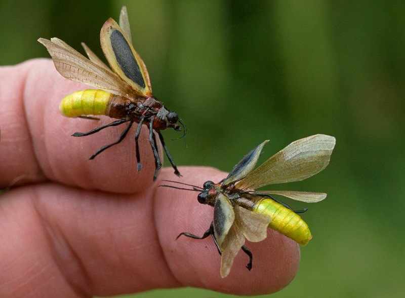 A pair of realistic Lightning Bugs created for Georgia Power advertisement