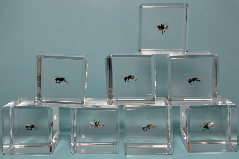 Breaking Bad flies embedded in clear Lucite blocks