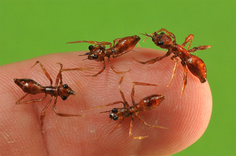 realistic insect props for filming and photography