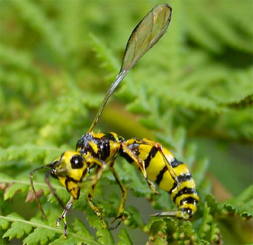 Realistic Yellow Jacket wasp