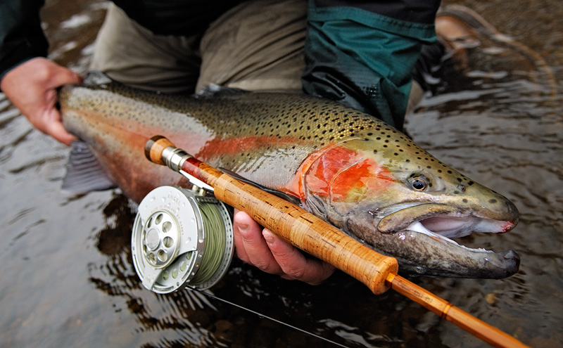 My Favorite Rainbow Trout Caught And Released In New York