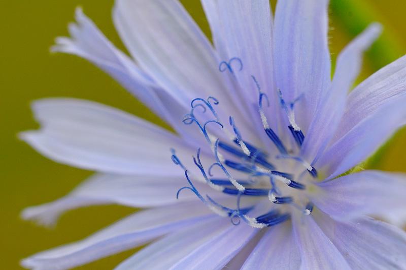 New York State Native Wildflower Photography