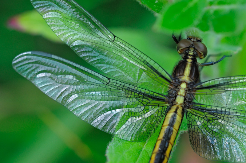 Close up view of a beautiful dragonfly