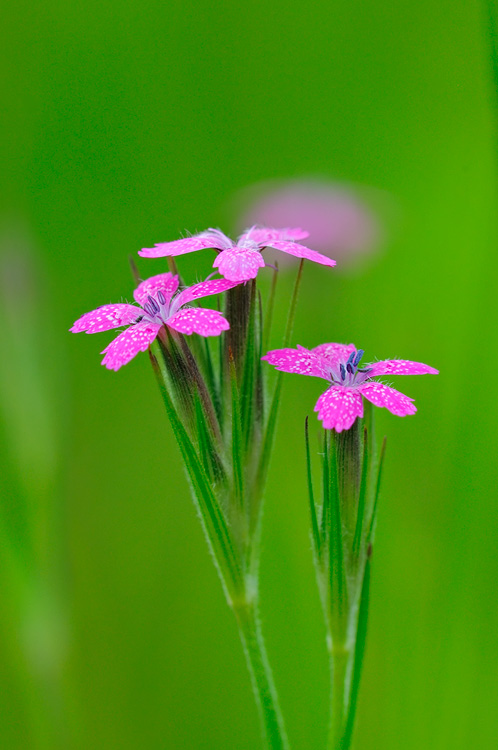 New York State Native Wildflower Photography