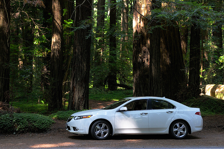 Acura TSX in the Redwood Forest