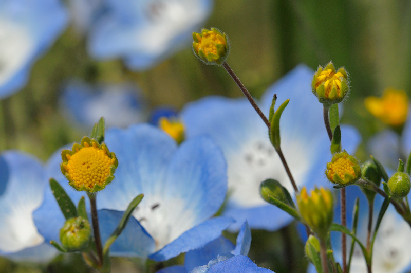 Yellow and Blue wildflowers in bloom