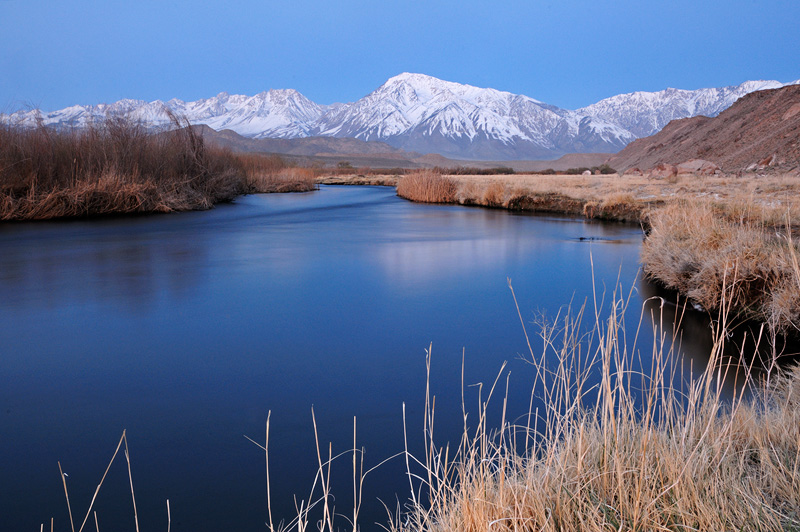 California desert and sierra wildflowers and migrating birds for Bishop ca fishing