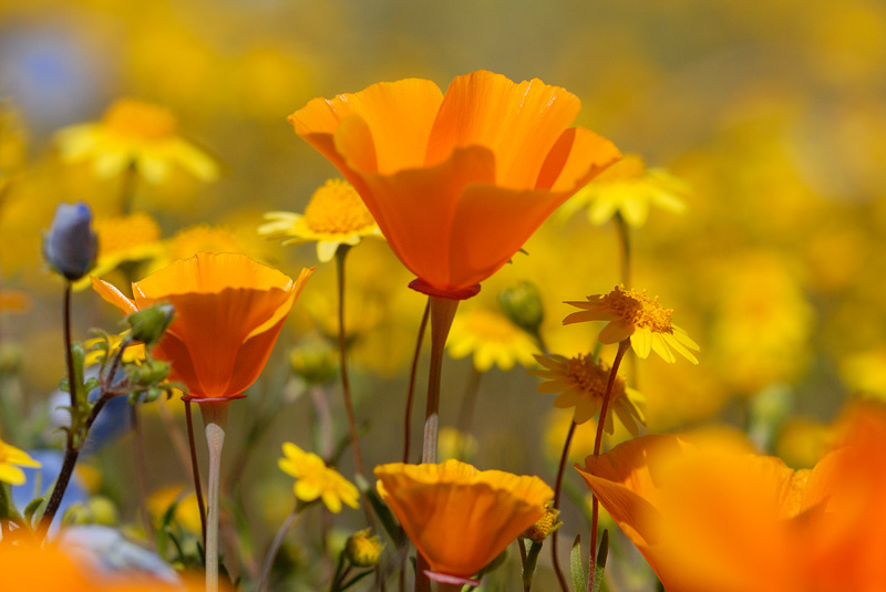 A glorious california spring day wild flowers macrog native california spring wildflowers mightylinksfo