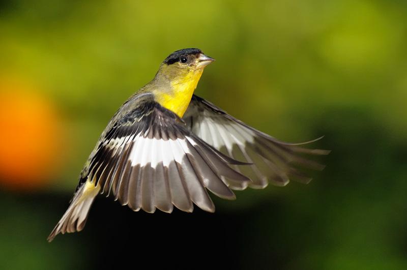 Bird painting  Etsy