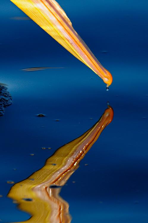 мешок для ловли рыбы сканворд