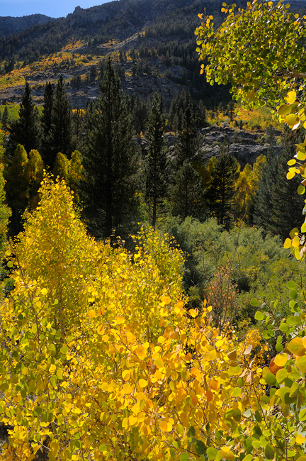 2010 California Eastern Sierra Fall Colors And Nature