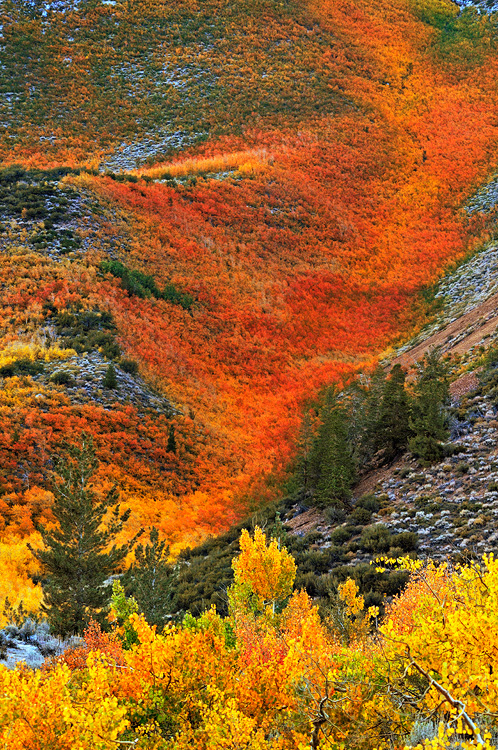 California Eastern Sierra Fall Foliage Color Photography