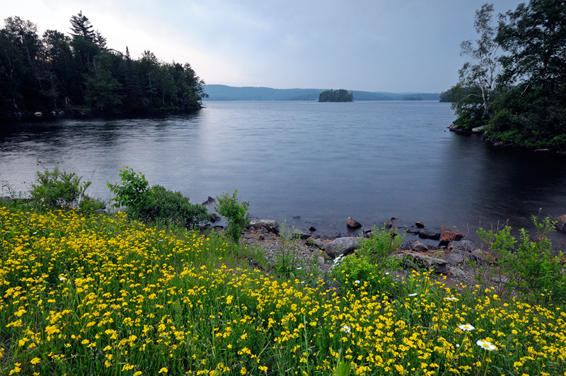 Adirondack New York wild flowers. Clearing Storm